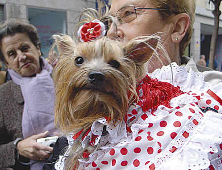 dame.hund450x344